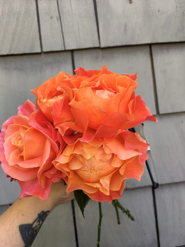 An image of a bouquet of peach and orange garden roses that are halfway open, with ruffly petals. Grown by Folk Art Flowers in Seattle, WA.