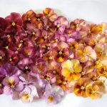 Wedding colors - a wedding color palette within the same species of pansy
