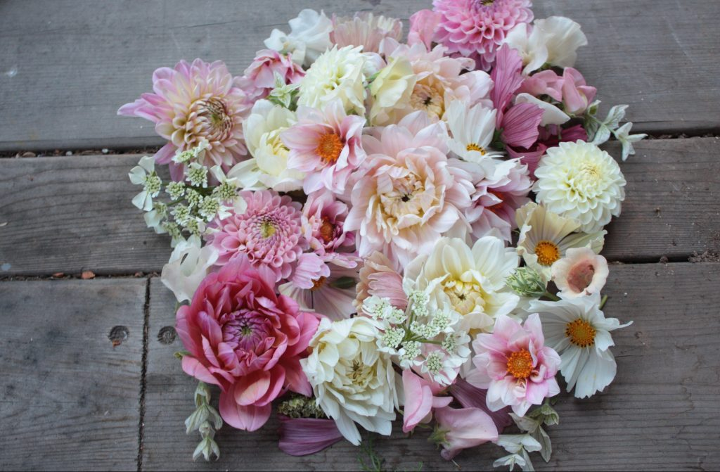 summer flowers dahlia foxglove cosmos flatlay seattle weddings seattle wedding florist best wedding florist seattle seattle wedding flowers seattle floral design seattle floral designer seattle dahlias seattle florist
