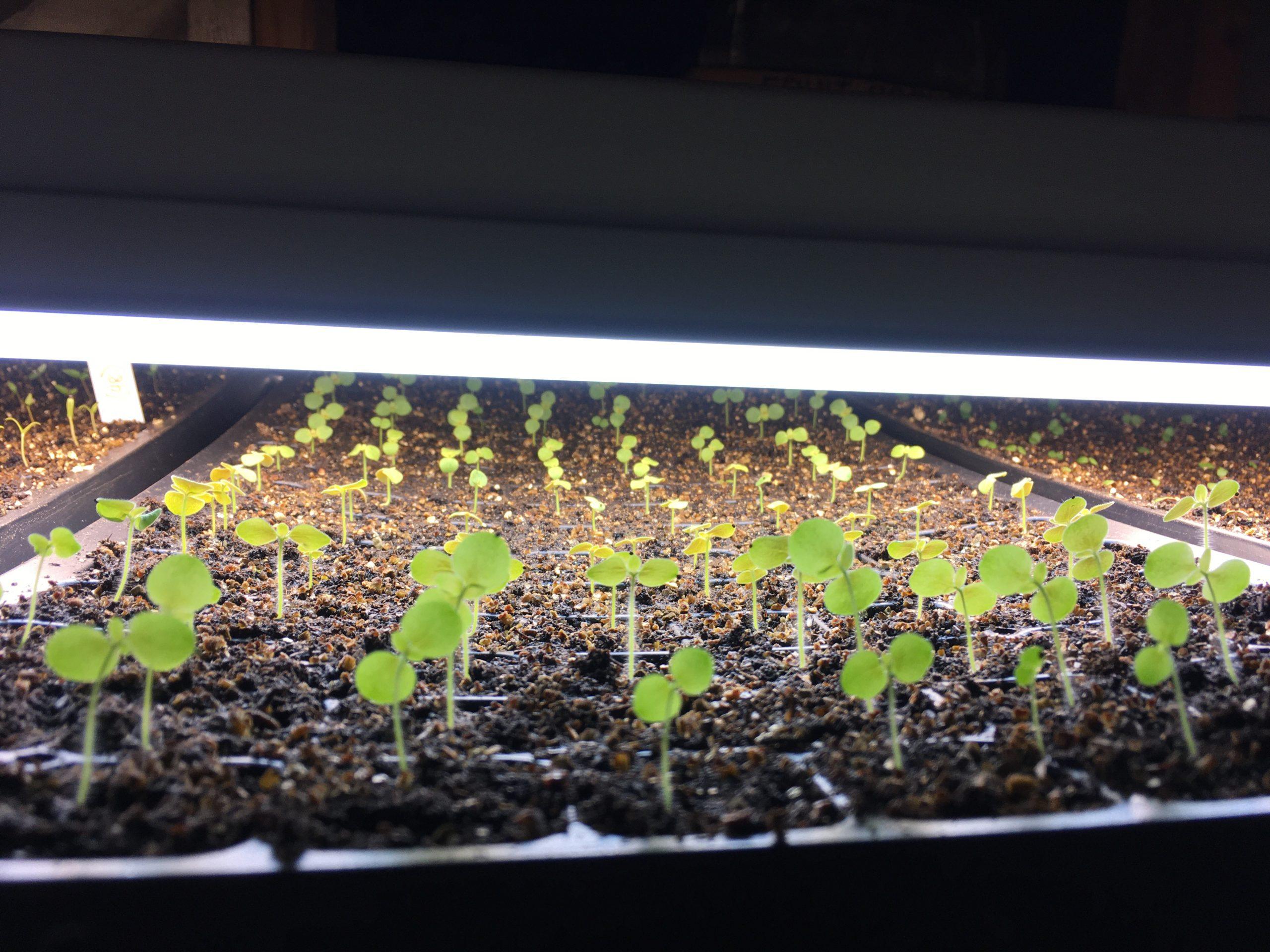 seed starting in spring