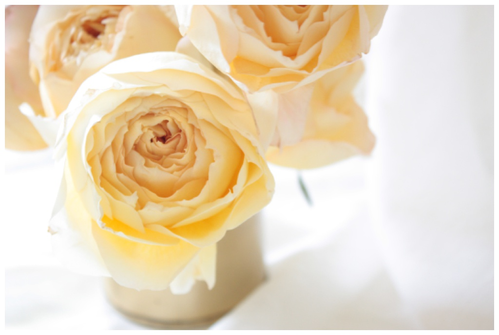 golden garden roses in a gold vase against a white backdrop