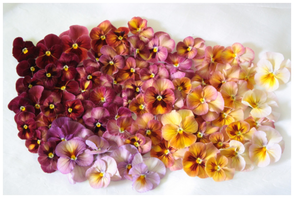 a rainbow ombre of antique shaded pansies, laid flat on a white background