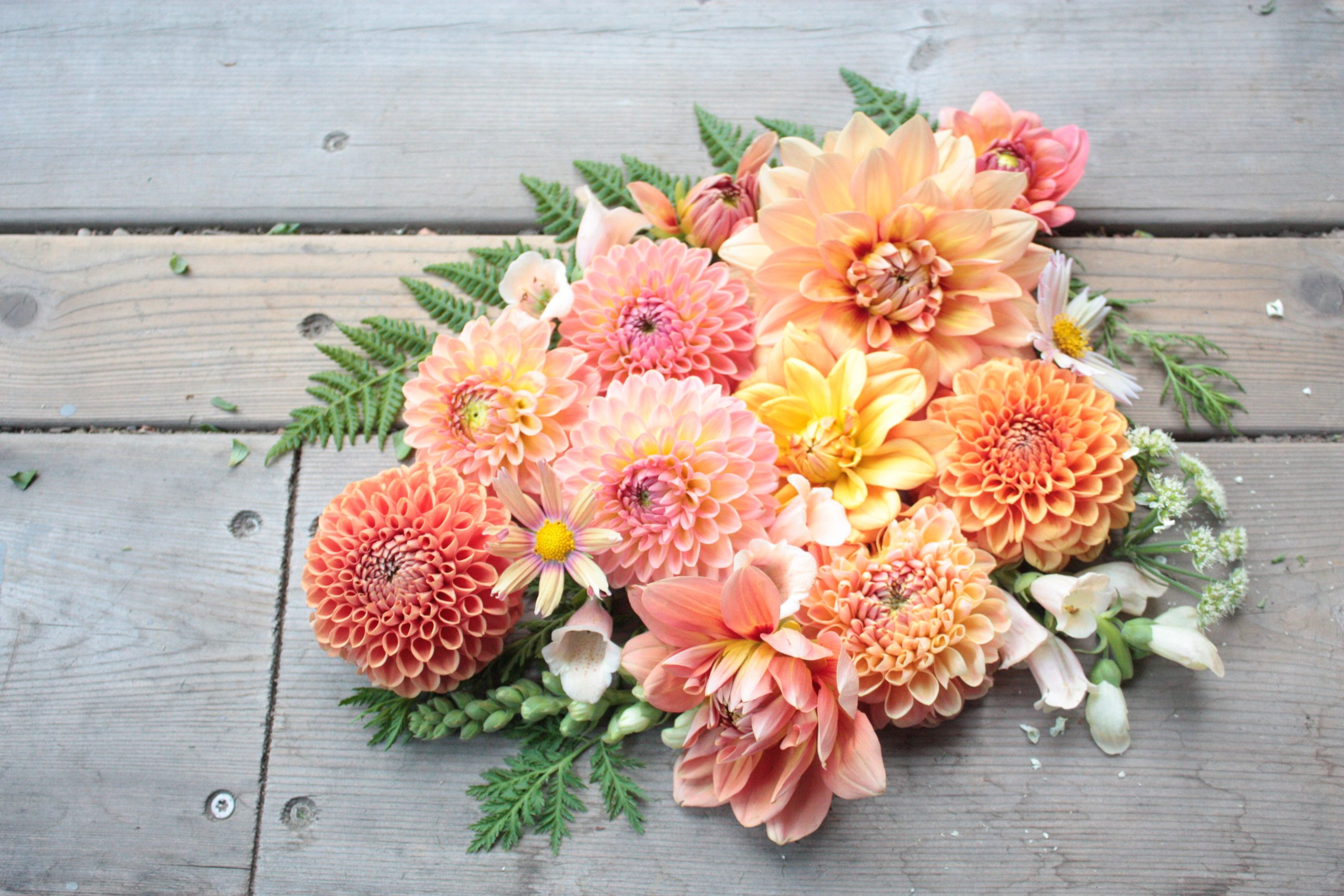 z flat lay photo with dahlia heads, ferns, and cosmos